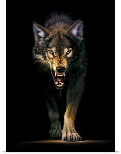 Artwork Lobo, Wolf Artwork, Wolf With Blue Eyes, Wolf Eyes, Wild Animal Wallpaper, Wolf Wallpaper, Beautiful Wolves, Most Beautiful Animals, Big Cats Art