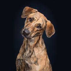 Gorgeous Dog by Elke Vogelsang 🐶