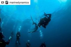 24 Likes, 1 Comments - Dirty Boots Adv Adventure Activities, Instagram Repost, Scuba Diving, South Africa, Whale, Ocean, Tours, Link, Check