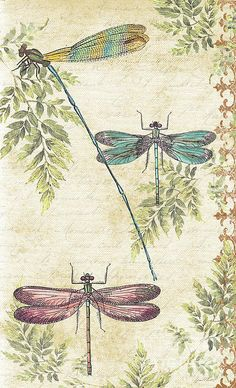Dragonflies In The Summertime-jp2325 Print By Jean Plout