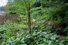 Blueberry path in july - Lindas trädgårdsblogg