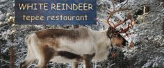 Nuuksio Reindeer park; for a fee you get to have traditional coffee + pulla and get to feed the rendeer
