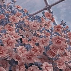 Aesthetic Objects, Aesthetic Themes, Aesthetic Images, Aesthetic Photo, Aesthetic Wallpapers, Peach Aesthetic, Aesthetic Vintage, Theme Background, Wall Collage