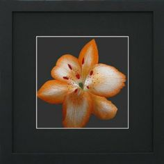 "Susho, King Silk Art 100% Handmade Suzhou Silk Embroidery - Orange Flower with a Touch of Red - Black Mat, Black Frame 36108BF by King Silk Art. $29.98. 12""x12"" with mat only; 13""x13"" with mat and frame. A unique gift for all occasions.. Susho artists split silk threads to vary thickness and use up to 40 different stitches and over a 1,000 different colors of silk thread to create detail, texture and depth.. Each King Silk Art design is 100% hand-stitched and thus..."