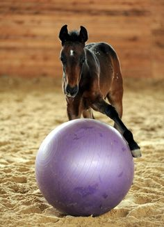 Let's play! ~ Find an activity ball for your horse here: www.chicksaddlery.com/page/CDS/PROD/AB2399