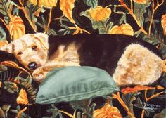 """""""Sofa Safari"""" Airedale painting by Tanya Amberson. 5x7 acrylic on gallery wrapped canvas. This painting is sold but we are always happy to take commission requests. Email the artist: TanyaAmberson@frontier.com 