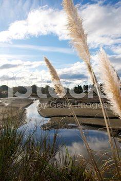 'Toitoi' or 'Toetoe' Grass, Mapua Estuary, NZ royalty-free stock photo South Island, Native Plants, Image Now, New Zealand, Grass, Coastal, Flora, Royalty Free Stock Photos, Old Things