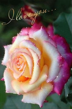 FLOWER LOVE ---