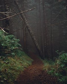timberphoto:  The woods are lovely, dark, and deep, But I have promises to keep,  And miles to go before I sleep (at Saddle Mountain)