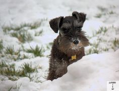 Our puppies first snow. Gabe is almost 6 months old. Shot by Gavin Gillett