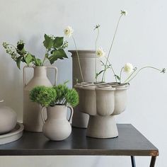 Indoor Garden Collection: Shane Powers for West Elm