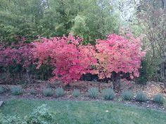 Lafayette, California, Fall 2012.
