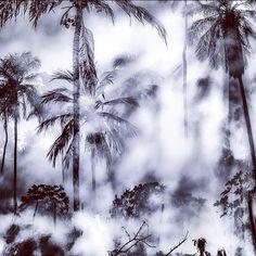 Misty Morning by Dante Laurini Jr