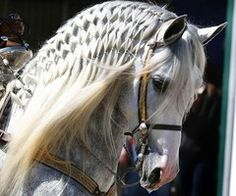 Andalusian horse with beautiful braided mane, well, cool designed mane. Andalusian horse with beautiful braided mane, well, cool designed mane. All The Pretty Horses, Beautiful Horses, Animals Beautiful, Cute Animals, Beautiful Braids, Nice Braids, Horse Photos, Horse Pictures, Horse Braiding