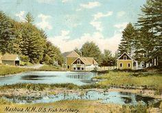 Vintage Postcard, circa 1907 of the Nashua (NH) Fishery.