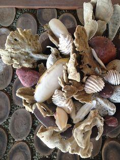 Shells+Sponge