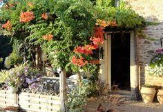 trompetenblume pergola blumen bepflanzen italienisch