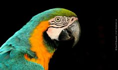 Guacamaya / macaw by David D.Bernárdez on 500px
