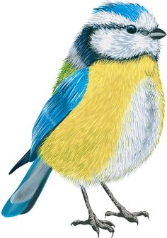 Фото, автор Soloveika на Яндекс.Фотках Bird Illustration, Botanical Illustration, Owl Art, Bird Art, Ariana Grande Drawings, Bird Coloring Pages, Bird Theme, Felt Birds, Bird Drawings