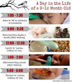 Example of a possible daily rhythm for a 9-12 month old baby ~ http://incredibleinfant.com/sleeping/9-12-month-schedule/