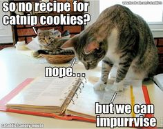 Cat Treat Humor: No recipe for catnip cookies? Kitty knows what to do...