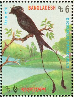 Greater Racket-tailed Drongo stamps - mainly images - gallery format