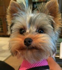 Reader pets | Photo Galleries | HeraldTribune.com