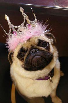Pug princess