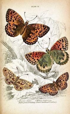 mariposas decoup