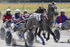 This is Doctor Bones, 2012-13 Harness Horse of the Year in New Zealand, and who's sire is also Monkey Bones!