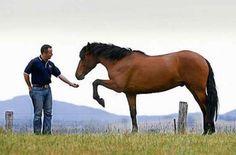 Tradicionalmente se ha considerado a los caballos uno de los animales más inteligentes que existen. Durante muchos años el ser humano tan solo los utilizaba como alimento, sin embargo en algún momento de la Prehistoria nos dimos cuenta que eran mucho más útiles como compañeros de viaje o de trabajo,