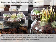 21 Simple Ideas For Adorable DIY Terrariums