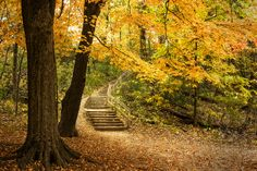 Stairs To Autumn (more on http://epic.do)
