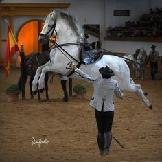 jerez horse fair, only 2 hours away Horse Dance, Horse Art, Spanish Riding School, Laughing Animals, Moraira, Dressage Horses, Andalusian Horse, White Horses, Horse Photography