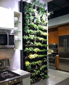 Must do this considering our spices outside this year failed miserably. Besides, cleaner air and a beautiful (smelling and visually) wall.