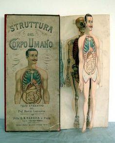 My kind of paper doll!  Sussidi didattici: Atlante corpo umano.
