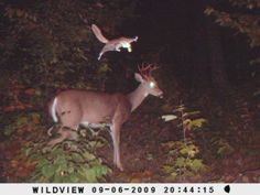 """""""BONZAI!"""" --Hilarious Trail Cam Photos Show What Animals Do When They Think We're Not Watching."""