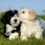 Top 8 Most Faithful Dog Breeds  People have established an astonishing relation with dogs from th ..  http://www.dogisto.com/top-8-faithful-dog-breeds/