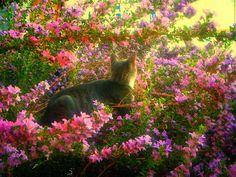 Socko in the Flower Bush 2
