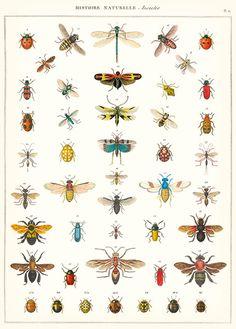 Poster von Cavallini