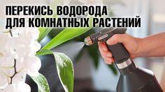 Перекись водорода для цветов: полив ❀ опрыскивание ❀ обработка почвы.