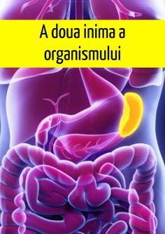 SPLINA, a doua inimă a organismului Good To Know, Life Hacks, Gadget, Thailand, Health, Travel, Medicine, Plant, Anatomy