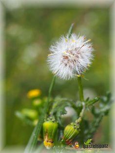Eine kleine Pusteblume in unserem Garten