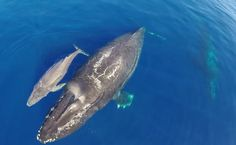 Camera Drone Captures Gorgeous Video of a Dolphin Stampede and Whales Migrating