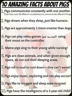 get to experience dreaming piggies and singing mommas everyday! And people wonder why I work in a hog barn :) This Little Piggy, Little Pigs, Pig Facts, Farm Facts, Pig Showing, Pot Belly Pigs, Teacup Pigs, Pig Farming, Animal Science