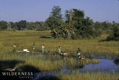 The Wilderness Way – a brief history Humble Beginnings, 30 Years, Conservation, Wilderness, Safari, Trips, Africa, Country Roads, History