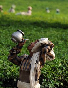 sukhada:    Indian female tea garden labourer drinks water as she plucks tea leaves in a field of the Kiranchandra Tea Estate on the outskirts of Siliguri on October 14, 2011. Tea growers in northeastern India say climate change has hurt the country's tea crop, leading not just to a drop in production but also subtly altering the flavor of their brew.