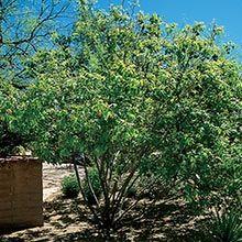 195 Best Arizona High Desert Gardening Images On Pinterest