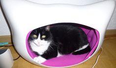 MEIN Rose-Moment ist die lieber meiner Katze Cleo :-)
