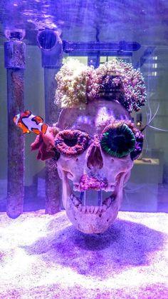 Skull - KUNSTHAL Rotterdam Saltwater Tank Setup, Saltwater Aquarium Fish, Fish Aquariums, Coral Reef Aquarium, Marine Aquarium, Salt Water Fish, Salt And Water, Nano Reef Tank, Reef Tanks